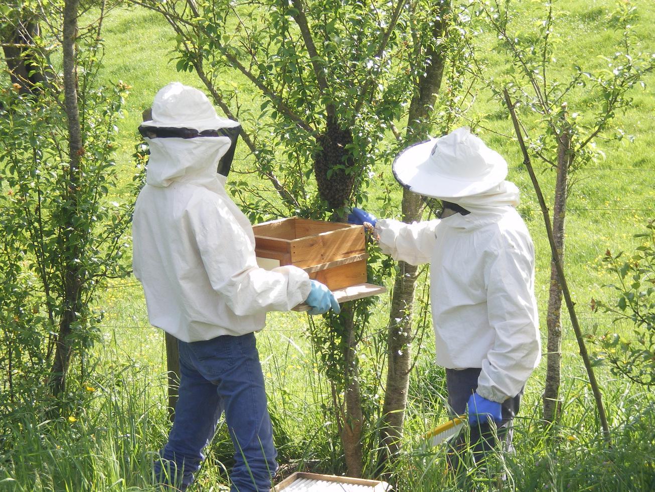 Le sommeil des abeilles
